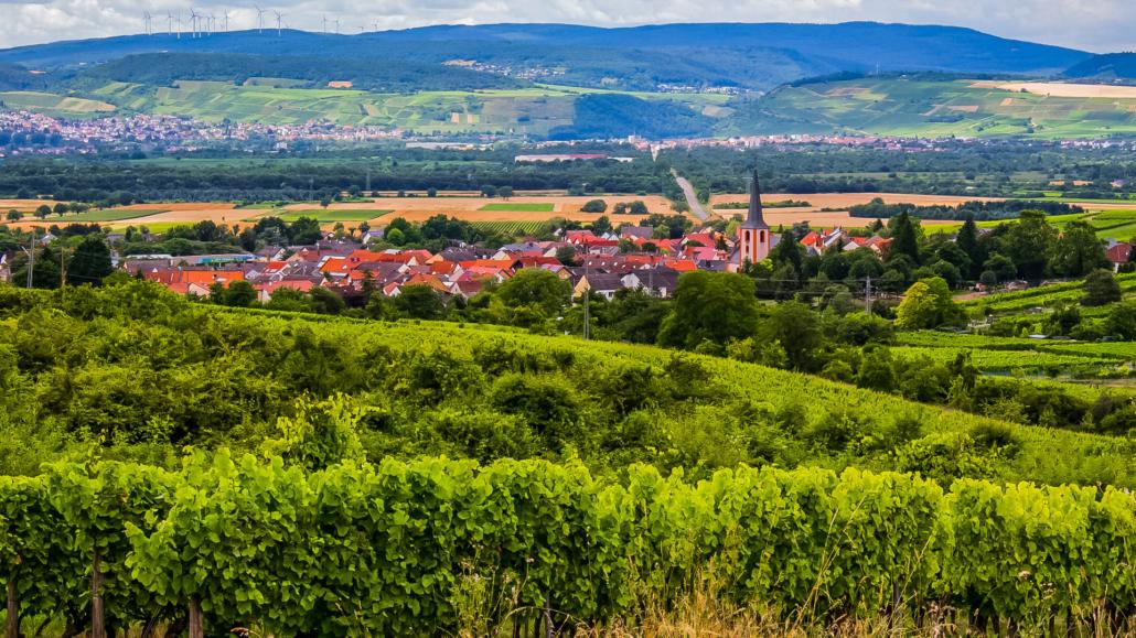 Weingut Fleck-Reich